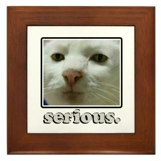 Serious Cat  Popular Pet T Shirts & Gifts  PetGiftz