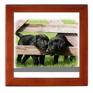 Labrador Pups 9Y415D 168 Keepsake Box