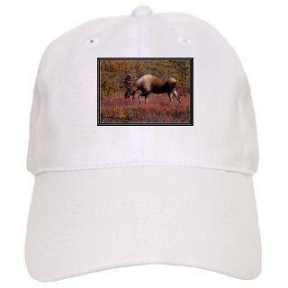 Bullwinkle Hat  Bullwinkle Trucker Hats  Buy Bullwinkle Baseball