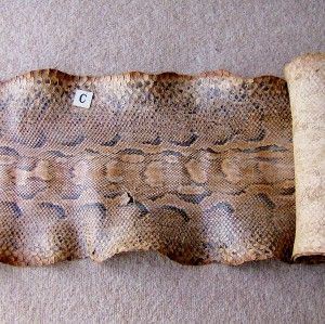 ANTIQUE AFRICAN ROCK PYTHON SNAKE SKIN *8 ft 7* TAXIDERMY * GORGEOUS