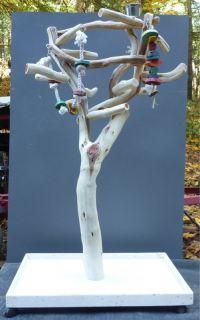 Manzanita Parrot Tree Bird Stand Toy Play Gym Like Java Wood Natural