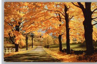 Postcard Vermont Sugar Maples Trees in Autumn VT
