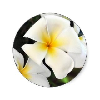 Tropical Plumeria Flower Sticker