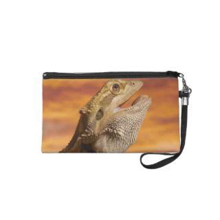 Bearded dragon (Pogona Vitticeps) on rock, Wristlet Clutches