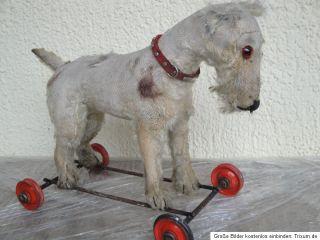 ANTIQUE STEIFF TERRIER DOG 1930s ON WHEELS   PULL BEHIND   TEDDY BEAR