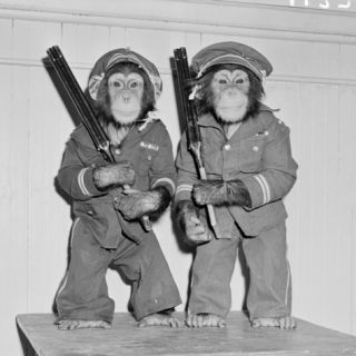 Two Chimpanzees Dressed As Policemen, Standing Holding Guns Photographic Print by H. Armstrong Roberts