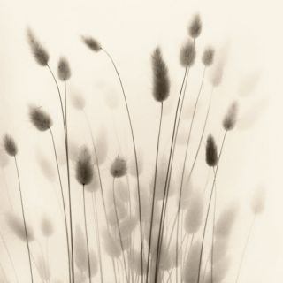 Italian Tall Grass No. 1 Print by Alan Blaustein