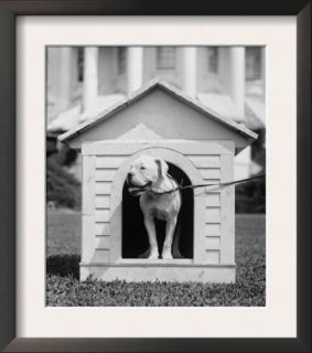 Mrs. Hardings Dog OBoy in a Doghouse on the White House Lawn. Aug 11, 1921 Pre made Frame