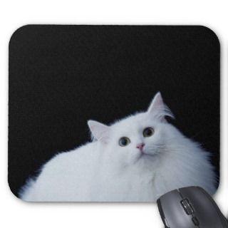 Siberian Mouse Photos   Auto Design Tech