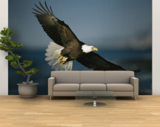 An American Bald Eagle in Flight Wall Mural – Large
