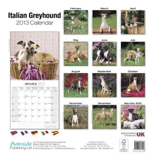 Kalender 2013 Italienisches Windspiel Italian Greyhound