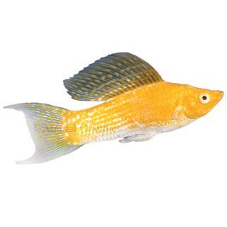 Aquarium fish live fish for sale for Live fish for sale