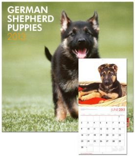 German Shepherd Puppies   2013 Wall Calendar Calendars