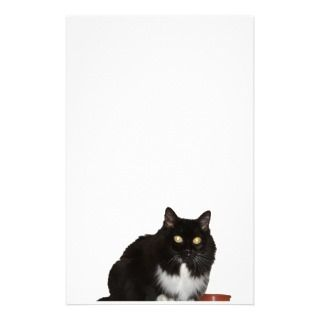Long Haired Pet Cat Stationery Design