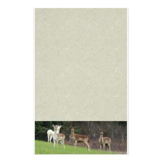 White & Brown Deer Stationery