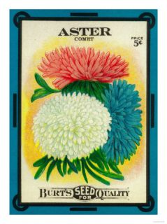 Aster Seed Packet Art