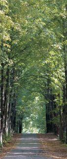 Tapete Park Parkweg Wald Bäume spazieren Foto 90 cm x 202 c