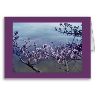 Cherry Blossoms at Tidal Basin, Washington DC 2 Greeting Cards
