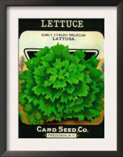 Lettuce Seed Packet Print