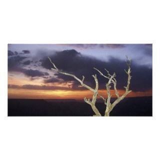 Photo Card   Grand Canyon Sunset Tree