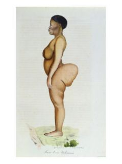 The Hottentot Venus, Bushman Woman, from LHistoire Naturelle Des Mammiferes Giclee Print by Carel Christian Anthony Last