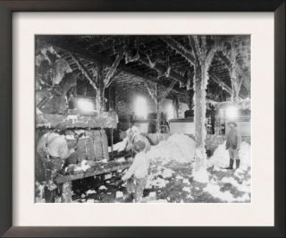 Men Operating a Cotton Gin Dahomey, MS Photograph   Dahomey, MS Print