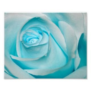 macro close up photo of a turquoise / blue rose.