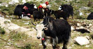 50g BAMYAK Yakwolle Tibet 75% Yak 25% Bambus LUXUS
