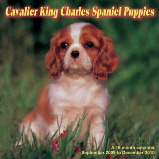 Cavalier King Charles Puppies 2010 Calendar