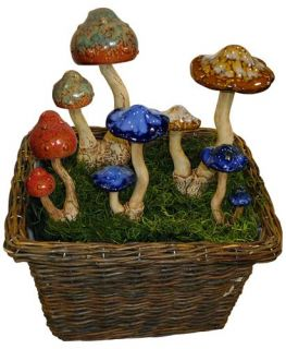 Terrapin Trading Company C5/TQI 53069 10 Medium Bell Cap Mushroom Display (20 Pack)